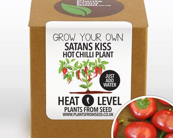 SALE!!! - Grow Your Own Satans Kiss Chilli Plant Kit