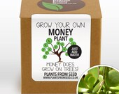 SALE - Grow Your Own Money Plant Kit