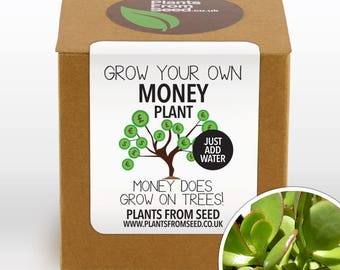 CHRISTMAS SALE!!! - Grow Your Own Money Plant Kit
