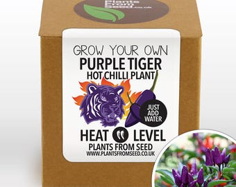 CHRISTMAS SALE!!! - Grow Your Own Purple Tiger Chilli Plant Kit