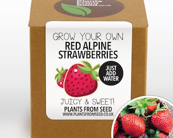 SALE!!! - Grow Your Own Red Alpine Strawberries Plant Kit