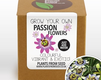 SALE!!! - Grow Your Own Passion Flowers Plant Kit