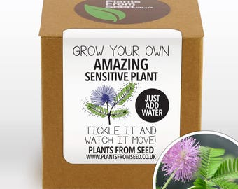 SALE!!! - Grow Your Own Sensitive Plant Kit