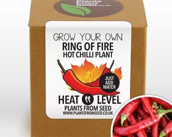 SALE!!! - Grow Your Own Ring Of Fire Chilli Plant Kit