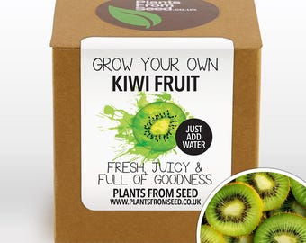 CHRISTMAS SALE!!! - Grow Your Own Kiwi Fruit Plant Kit
