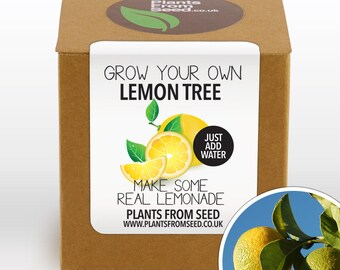 SALE!!! - Grow Your Own Lemon Tree Plant Kit