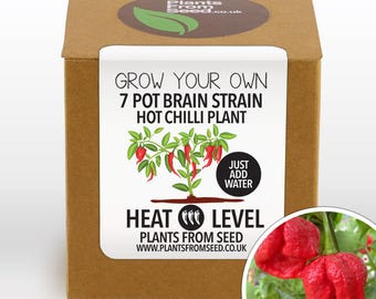 SALE!!! - Grow Your Own Brain Strain Chilli Plant Kit