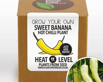 CHRISTMAS SALE!!! - Grow Your Own Sweet Banana Chilli Plant Kit