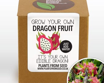CHRISTMAS SALE!!! - Grow Your Own Dragon Fruit Plant Kit