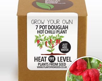 CHRISTMAS SALE!!! - Grow Your Own 7 Pot Douglah Chilli Plant Kit