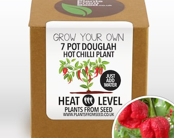 SALE!!! - Grow Your Own 7 Pot Douglah Chilli Plant Kit