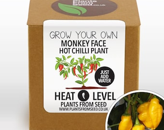 CHRISTMAS SALE!!! - Grow Your Own Monkey Face Chilli Plant Kit
