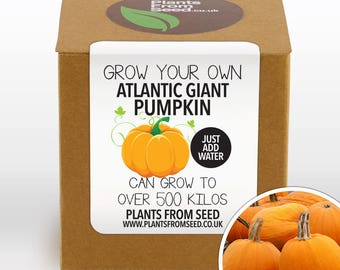 CHRISTMAS SALE!!! - Grow Your Own Giant Atlantic Pumpkin Plant Kit