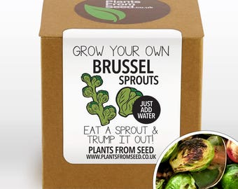 CHRISTMAS SALE!!! - Grow Your Own Brussel Sprouts Plant Kit