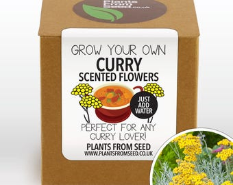 SALE!!! - Grow Your Own Curry Scented Flowers Plant Kit
