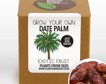 CHRISTMAS SALE!!! - Grow Your Own Date Palm Plant Kit