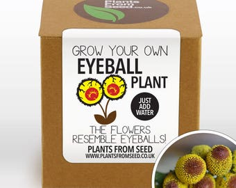 SALE!!! - Grow Your Own Eyeball Flowers Plant Kit