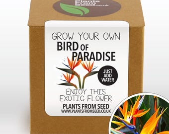 SALE!!! - Grow Your Own Bird Of Paradise Plant Kit