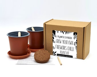 Grow Your Own Fireworks Chilli Pepper Plant Kit