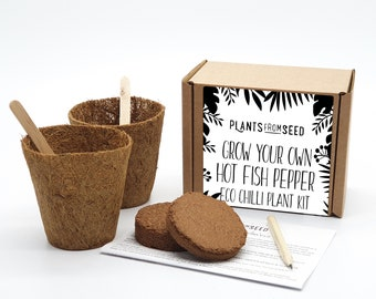 Eco Grow Your Own Hot Fish Chilli Pepper Plant Kit