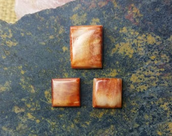 Orange Spiny Oyster Shell Rectangle Cabochon Set/ backed/ set of 3