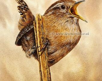 Watercolour Painting, Wren Bird, Original Painting, Realistic Bird, Illustration Art, Bird Artwork, Watercolor Birds, Wildlife Animals