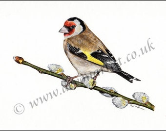Watercolour Painting, Original Goldfinch on Pussy Willow, Bird Art, Watercolor Birds, Finch, Wildlife Illustration