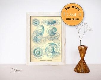 "Vintage illustration by Ernst Haeckel  - framed fine art print, sea creatures 8""x10"" ; 11""x14"", FREE SHIPPING 316"