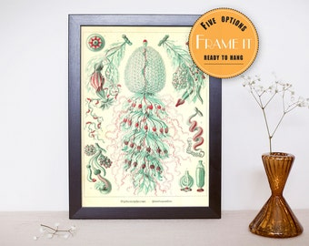 """Vintage illustration from Ernst Haeckel  - framed fine art print, sea creatures,sea life, 8""""x10"""" ; 11""""x14"""", FREE SHIPPING - 309"""