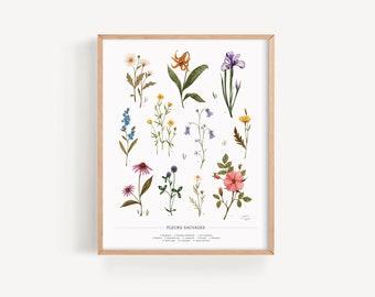 Wild flowers | Botanical illustration | Giclée Art Print | 11x14 | Joannie Houle Art