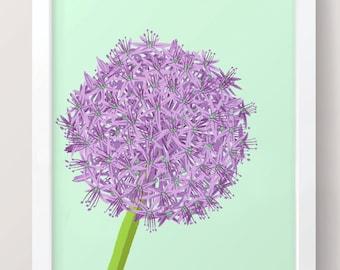 Allium - A4 Art Print // Illustrated Botanical Wall Art / Illustration Poster / Flowers & Plants Drawing / Home Decor