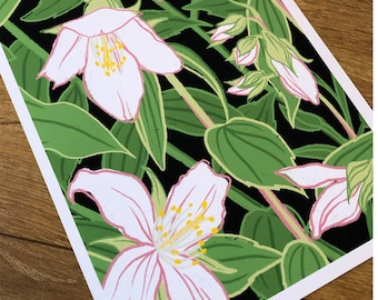 Jasmine - Art Print // Illustrated Botanical Wall Art / Illustration Poster / Flowers & Plants Drawing / Home Decor