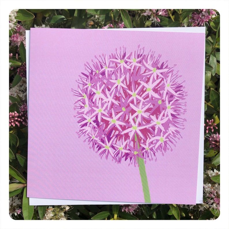 Allium  Greetings Card / blank inside // nature art / flower image 0