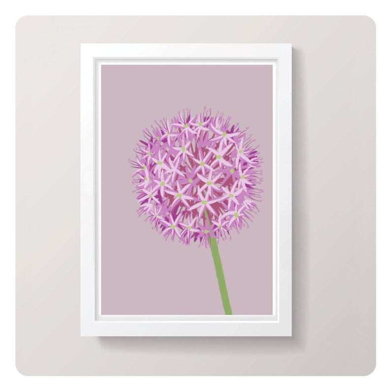 Allium  A4 Art Print  in Pink or Green // Illustrated image 0