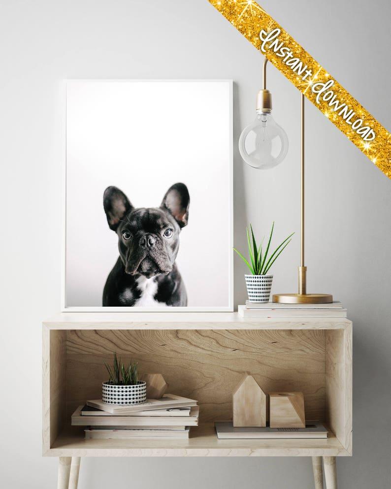 Printable Art Frenchie Art French Bulldog Photographic Print French Bulldog Photo Hipster Printable Digital Download
