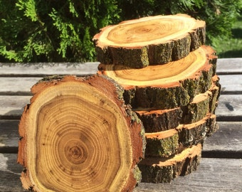 10 Black Locust Log (2-3in) Slice Hard wood coasters disk center piece DIY Wedding party shower wooden rustic natural glam