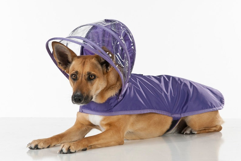Dog Raincoat  Purple  Rainbow Line image 0