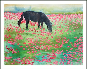 WATERCOLOUR - in the field of poppies