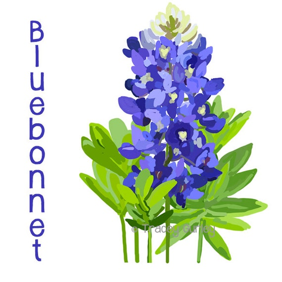 bluebonnet original art bluebonnet clip art texas state etsy rh etsy com bluebonnet flower clipart bluebonnet clipart border