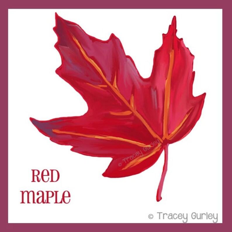 Red Maple Leaf Original Art autumn leaf clip art fall clip ...