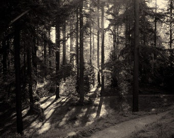Sunlight in Forest Park / Portland / Nature / Fine Art / Black and White