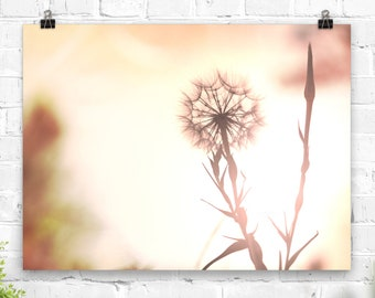 Pink Dandelion Photography Print poster flower print nature wall art floral nursery botanical pictures bedroom living room decor home decor