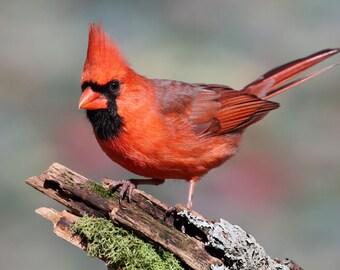 Cardinal signs | Etsy