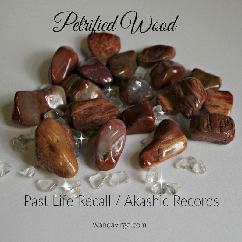 Three Tumbled PETRIFIED WOOD  Akashic Records / Grounding / image 0