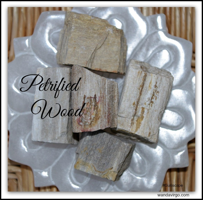 NATURAL PETRIFIED WOOD A Grounding Earth Element embodies the image 0