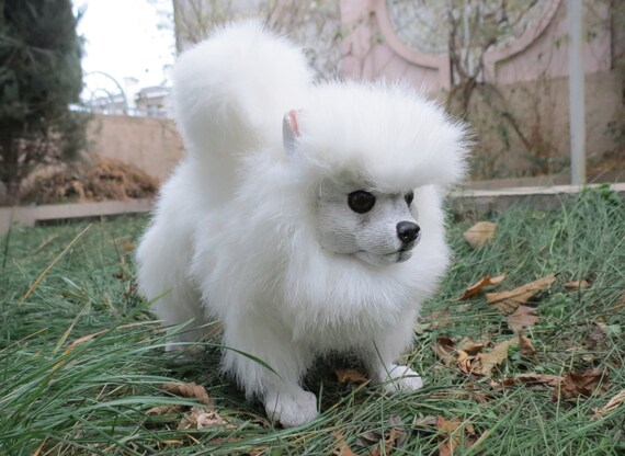 Spitz Pomeranian Dog For Example You Can Order Any Dog Etsy