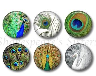 Decoupage magnets Aqua and coral magnet set Fridge magnets Nature lover gift Bird decor Bird magnets