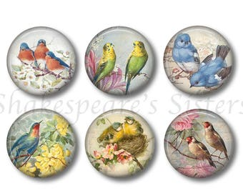 Lovely Beautiful Birds   Set Of Six 1.5 Inch Magnets   Lovely Bird Kitchen Decor    Refrigerator