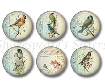 Bird Magnets   Set Of Six 1.5 Inch Magnets   Pretty Bird Kitchen Decor