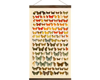 Vintage Butterflies, drawings from 1800's, Free Shipping
